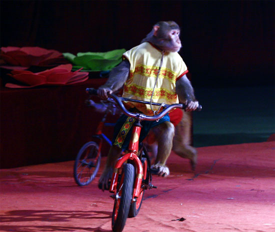 Dịch vụ xiếc chó xiếc khỉ
